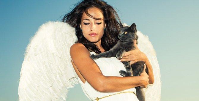 いつかは来る愛猫との別れ…猫を看取った後に飼い主がする事