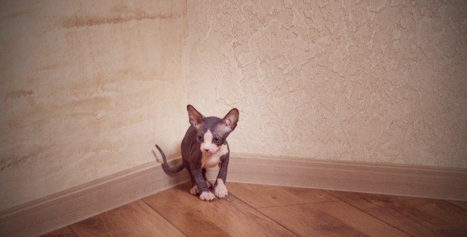 部屋の隅っこにいつも居る猫の心理3つ