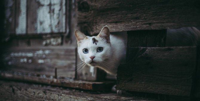 猫が『満月・新月』で行動が変わる3つの理由