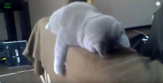 オモシロ可愛い眠り猫劇場♡寄ってらっしゃい、見てらっしゃい!
