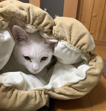 寒い季節にやりたい!猫の身体をすばやく温める方法