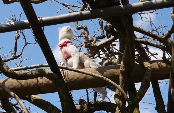 木をよじ登って未知の世界に辿り着いた三毛猫姉さん