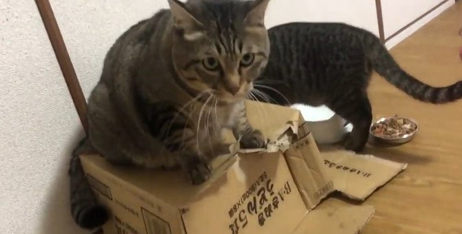 ダンボール箱の上で固まる猫さん。実はなにかを隠していた!?