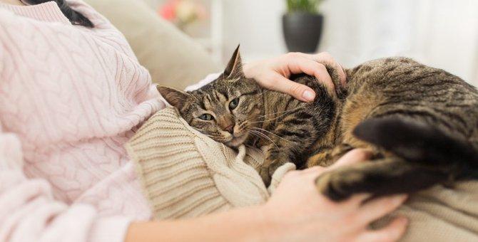猫が『甘えたくなる人』に共通すること4つ