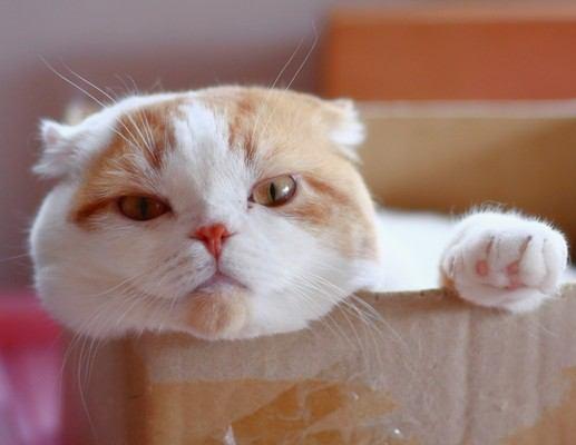 猫を長生きさせる秘訣10選