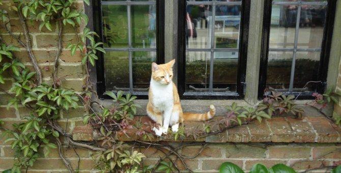 イギリス猫の旅♪英国チャーチル元首相が愛した猫『ジョック五世』に会いに行ってきました!