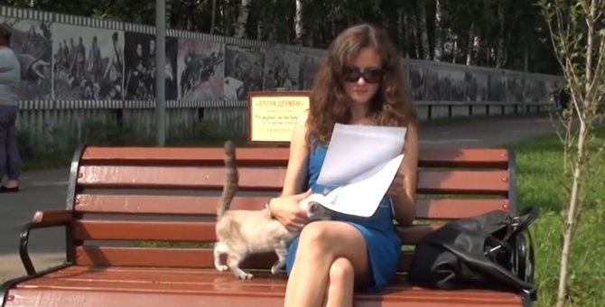 だからダメなの!どうしてもお姉さんの膝に乗りたい猫ちゃん