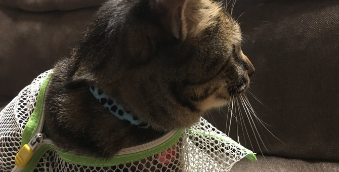 猫に洗濯ネットを活用する6つの方法