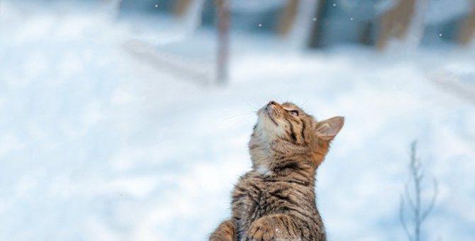 猫に雪道を歩かせる時に注意する事や対処法