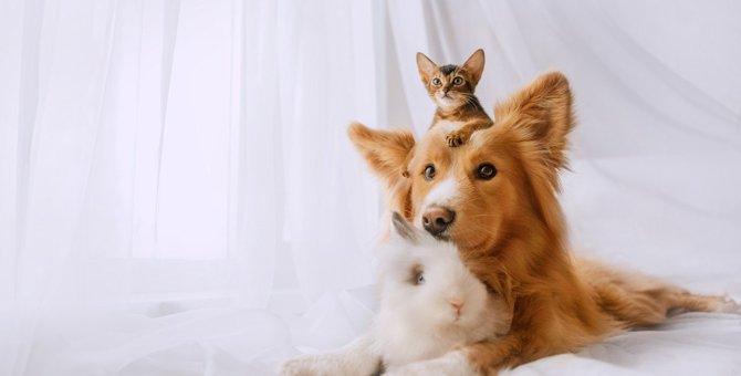 猫と『仲良しな動物』ランキングTOP3!一緒に暮らしやすい動物とは?
