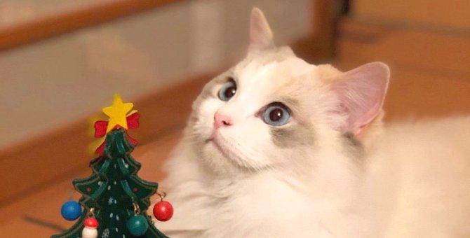 Laylaの12猫占い 12/16~12/22までのあなたと猫ちゃんの運勢