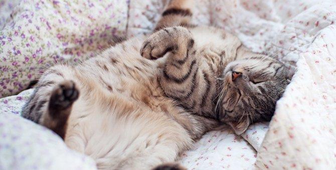 抱っこして!撫でて!猫が甘えたい時にする6つのサイン