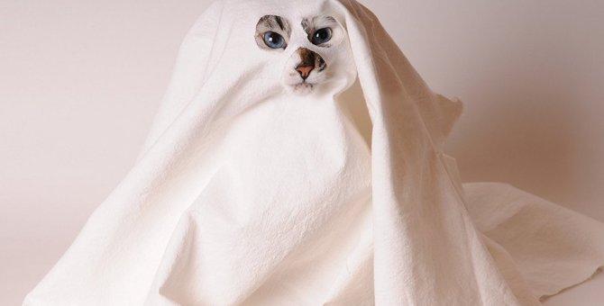 猫の霊がついてきた…?ある町を訪れた時に体験した不思議な話