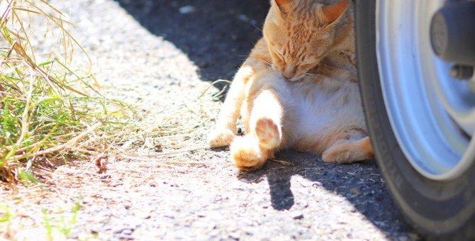 江の島の「猫スポット」はどこ?まったり過ごすねこちゃん達と触れ合あおう