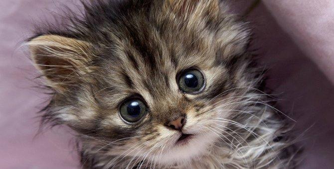 猫の要求にこたえすぎるデメリット5つ