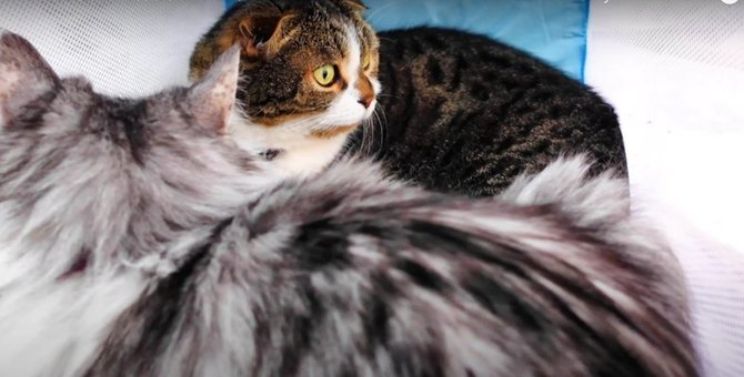 大好きな猫ちゃんとふたりっきりになれた猫くん♡