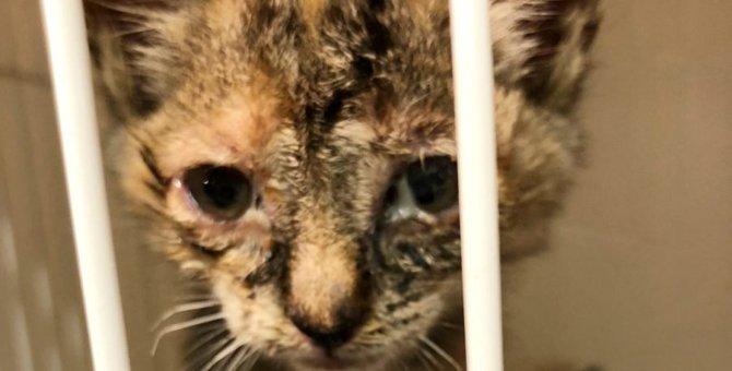 「怖いよう!」鳴き過ぎて顔つきが変わった子猫…愛を受けて大変身!