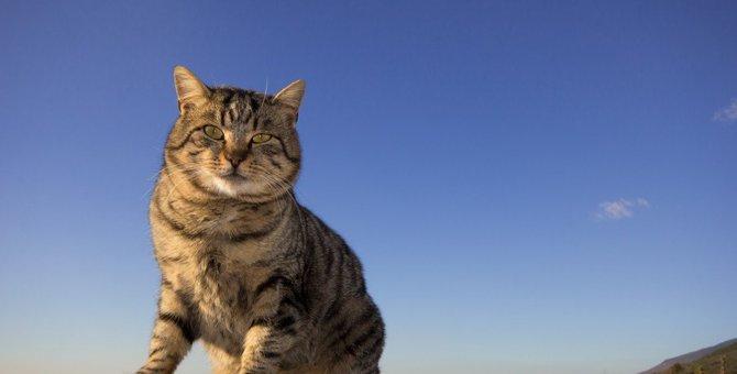 日本で語りつがれる『猫の神様』5選