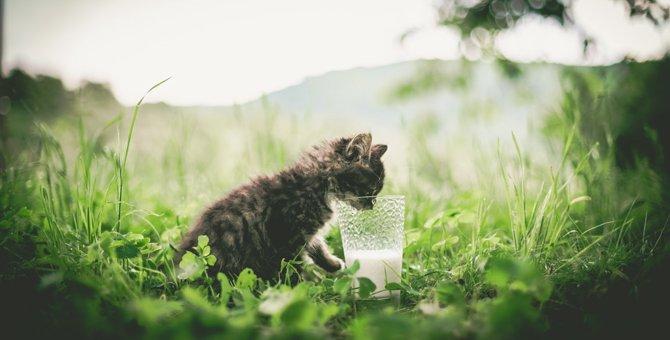 子猫にミルクを飲ませる方法や注意する点