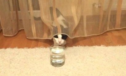 炭酸水を攻略したい!けど怖い…気持ちの狭間で揺れる猫ちゃん