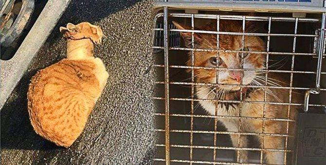 首にガムテープがはまった猫…ボロボロの状態から驚きの美猫へ!