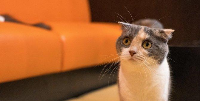 猫との生活に『向いていない』飼い主の特徴3つ
