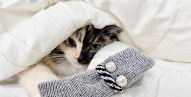 猫マフラーをDIY♡簡単!古着のニットを使用