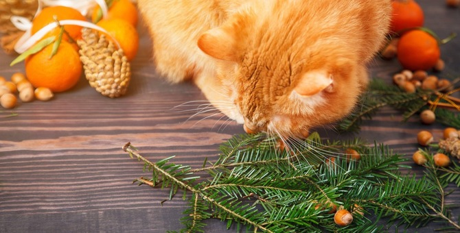 猫に栗を食べさせても大丈夫!与えた時の効果や注意する事