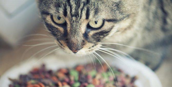 正しい猫フードの保存方法とは?一歩間違えれば猫の健康に悪影響!