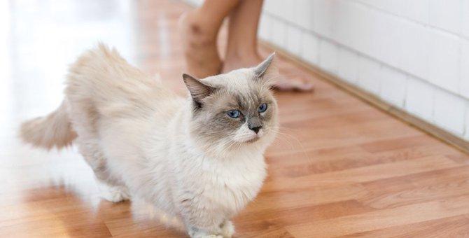 愛猫が同じところをぐるぐる回る!病気のサインかも!?