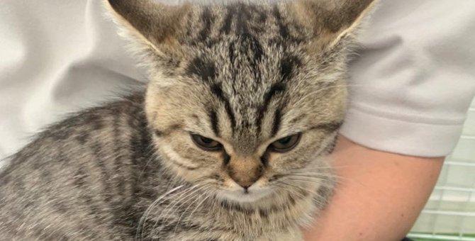 わかりやすい!めっちゃ怒っていることを隠し切れない子猫が話題!