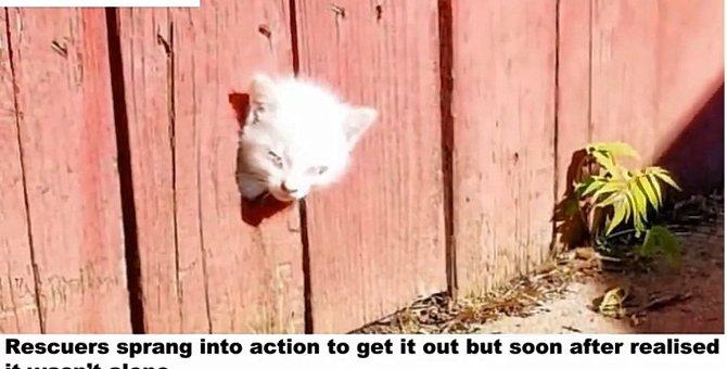 フェンスに頭を挟まれていた子猫は、身を挺して兄弟を救っていた...?!