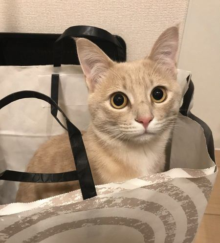 猫が心の準備を必要とすること6つ
