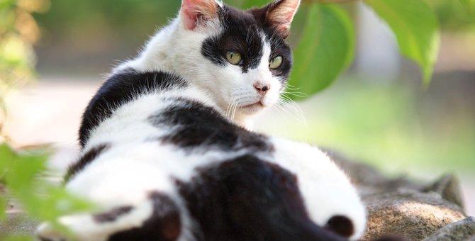 猫のおしりを叩くと気持ち良さそうにする理由