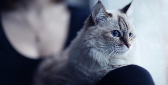 猫アレルギーで咳が出る原因と対策とは
