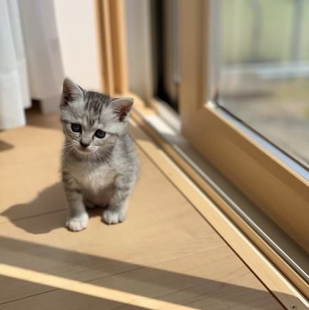 あなたの猫の『寂しがり屋度』を仕草で判定!いくつ当てはまる?