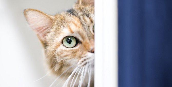 猫が『触られるのを避ける時』の原因5つと対処法