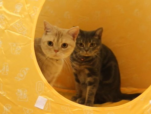 猫心くすぐる!子供用テントが熱い♡