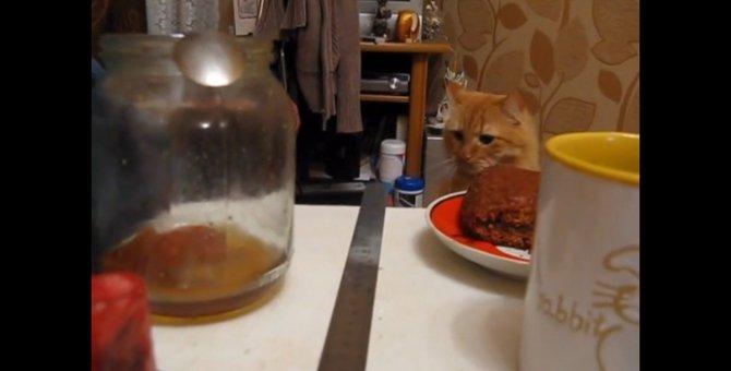 そぉっと近づき勢いよく叩く!自らを危機に晒してしまった猫ちゃん
