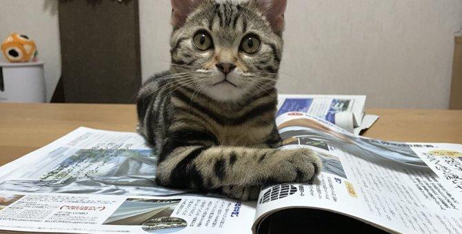 猫がこっそり確認している8つの事
