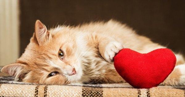 猫が飼い主にもっとして欲しい9つの事