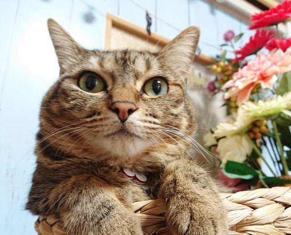 猫が密かにされたいと思っているスペシャルな対応3つ