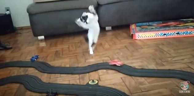 高速スロットカーに子猫大興奮!仁王立ちから舞い踊り!