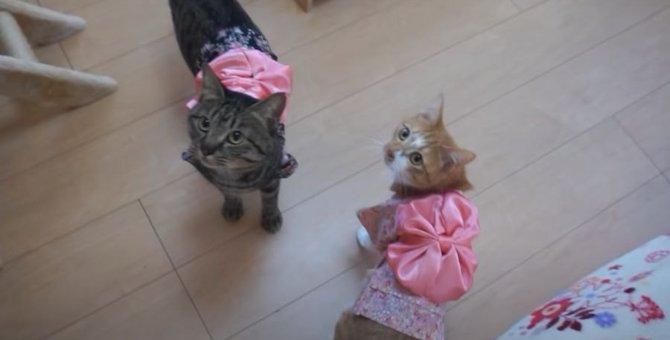 着物姿でお出迎え♡トロトロご飯に大満足な猫ちゃん