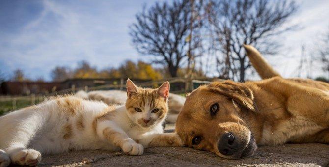 犬と猫の体の違い3つ