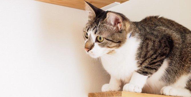 猫を賃貸で飼う時に気を付けたい4つのポイント