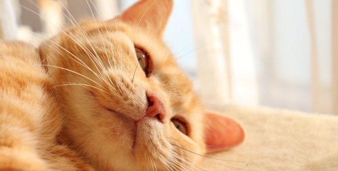 猫が自分の死期を悟る理由3つ