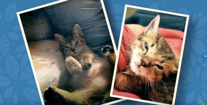 生まれつき「まぶたが欠けていた」2匹の保護猫。移殖手術の結果は…