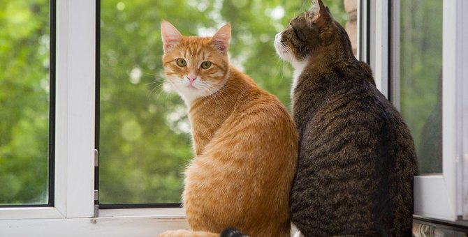 同居猫が死去…猫は『死』を理解できている?