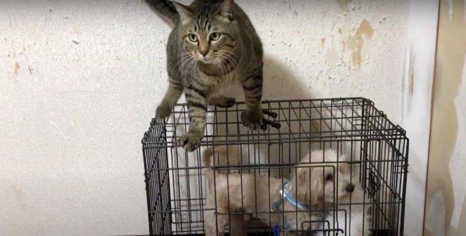 出動します!猫ちゃんの犬小屋調査隊♡